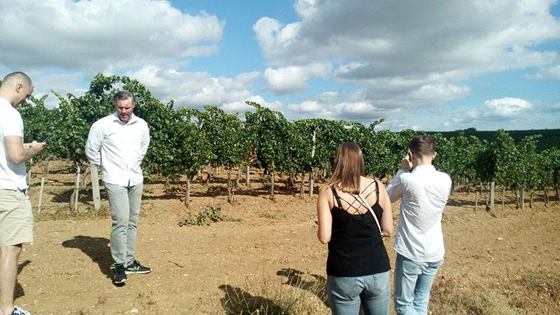 Виноградники Сатера